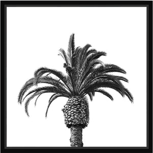 Black Phoenix Palm Framed Canvas - 30x30
