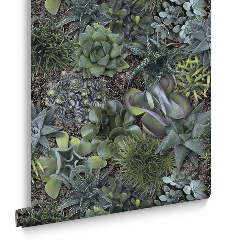 Graham & Brown Wallpaper | Succulent Greens | 101500