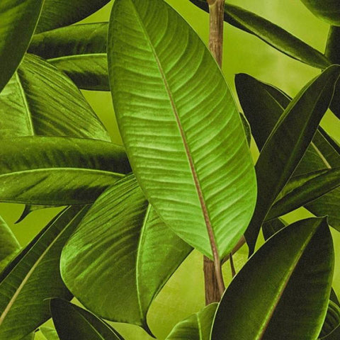 AS Creation Wallpaper | Neue Bude Palm Green | 36201-1