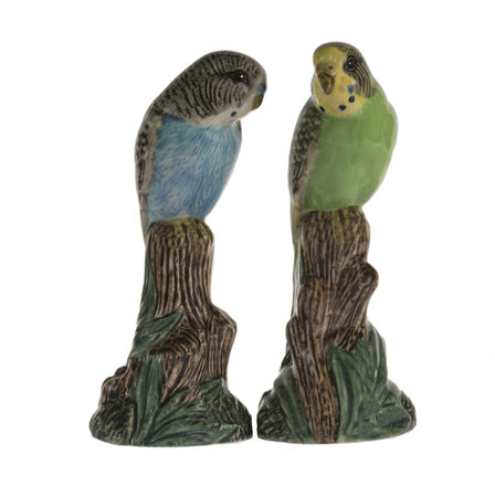 Budgerigar Salt & Pepper