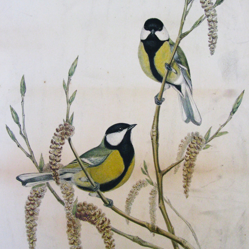 Greetings Card - Great Tit