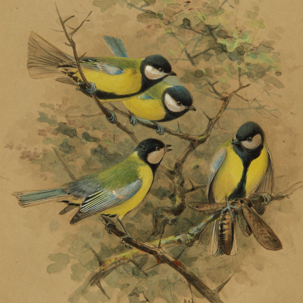 Greetings Card - Green Tits