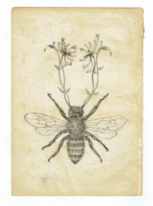 Honey Bee by Sarah Randles <br>Original Artwork