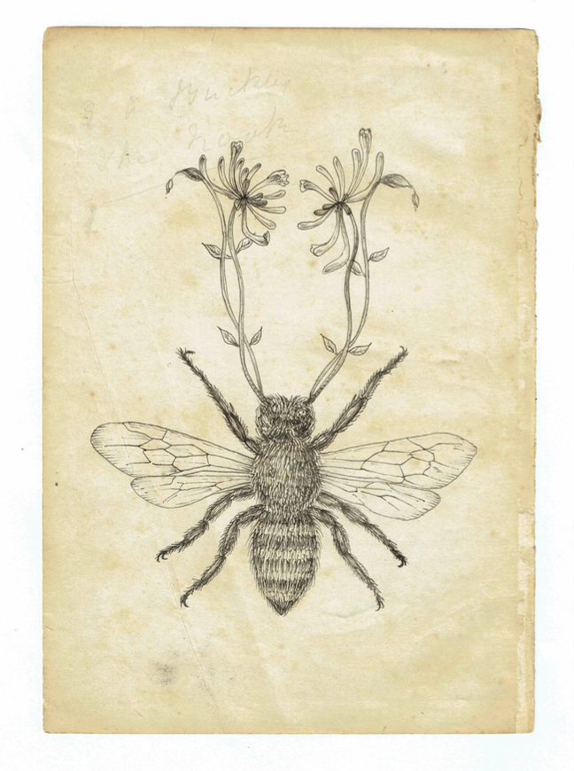 Honey Bee by Sarah Randles <br>Drawing