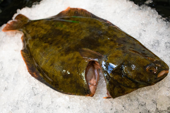 New Zealand Flounder (Frozen)