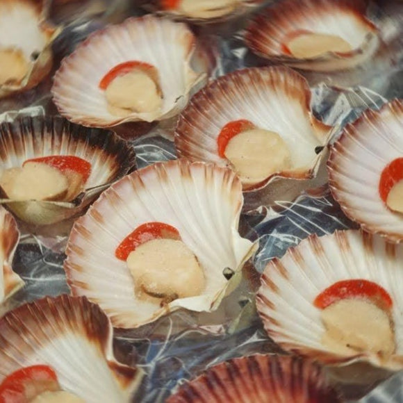 Tasmanian Queen Scallop (Half-Shell)