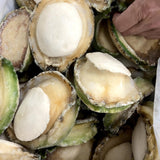 IQF XL Wild Caught Greenlip Abalone (MEAT ONLY)