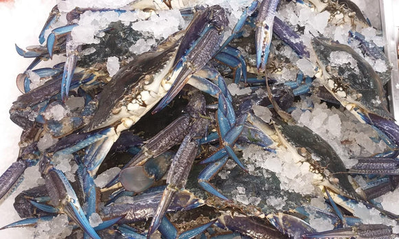 Wild Caught Blue Swimmer Crab