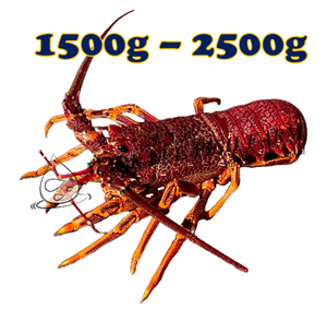 Wild Caught Southern Rock Lobster (1500g-2500g)