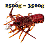 Wild Caught Southern Rock Lobster (2500g-3500g)