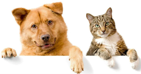 DOG & CAT HEALTH 🇺🇸- Don't Forget our Furry Friends - CBD Products