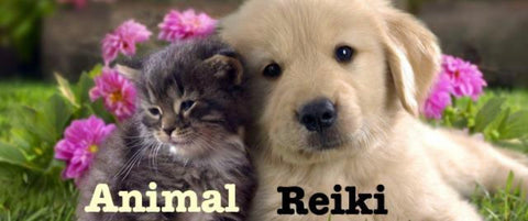 ANIMAL HEALING: 9 Courses Package