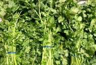 Coriander - Bunch