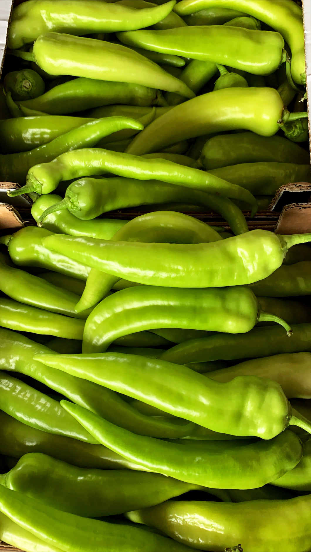 Peppers Turkish  pack of 6