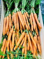 Carrots on a bunch