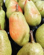 Pears William