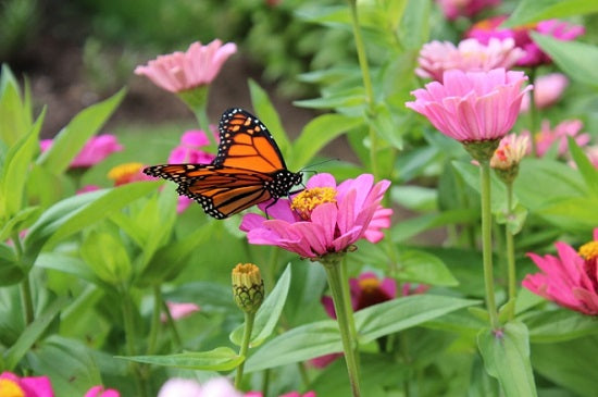 How To Attract Beneficial Insects