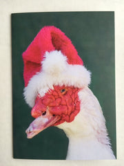 Holiday Photo Card Bruce