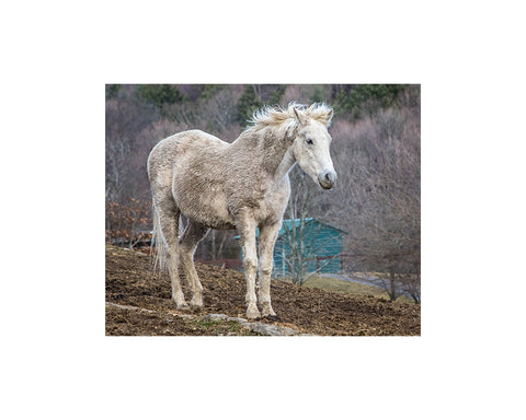 Photo Portraits from Catskill Animal Sanctuary - Large
