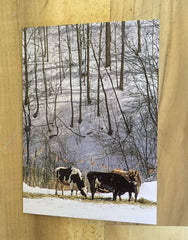 Holiday Photo Card Cow Trio