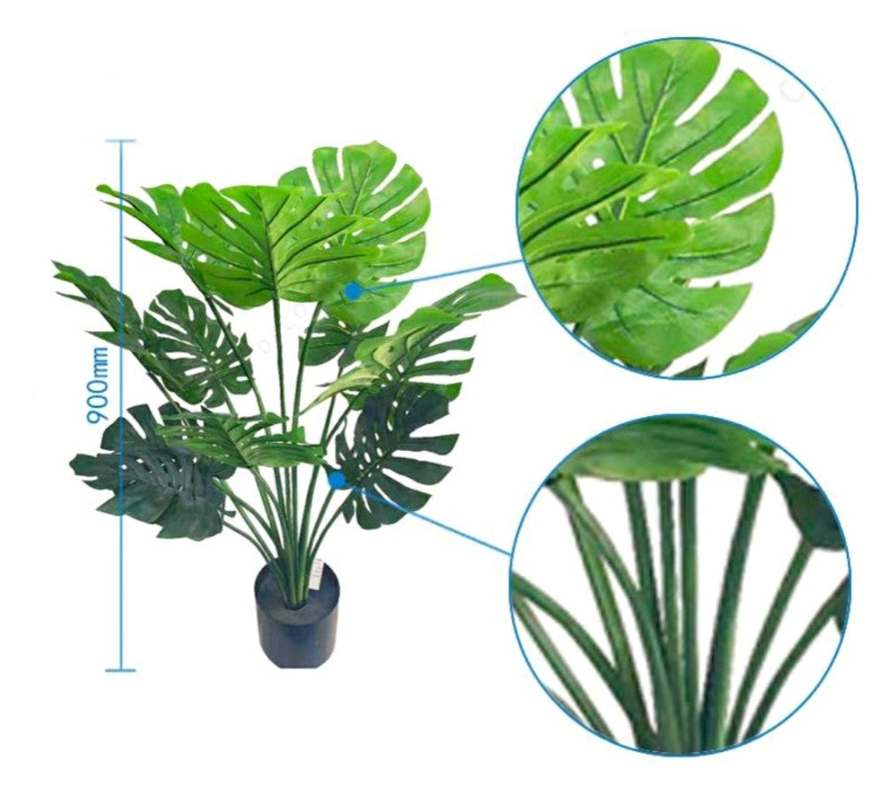 "Monstera ""Obliqua"" Plant (3')"