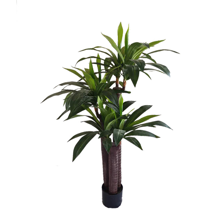 "Dracaena Tree ""Fragrans"" (5')"