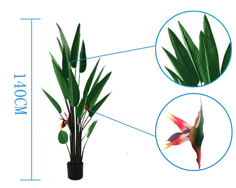 "Bird of Paradise ""Jobi"" (4'8"")"