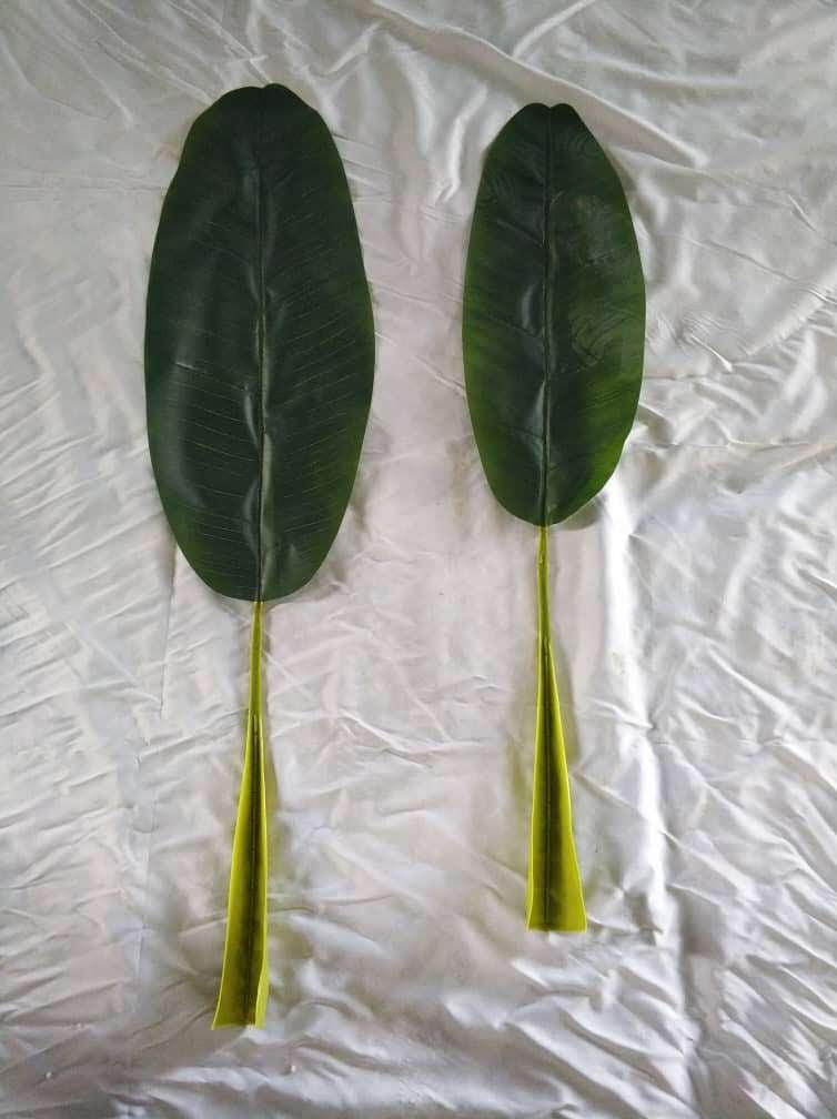 Banana Plant Leaf (1 foot 11 inches)