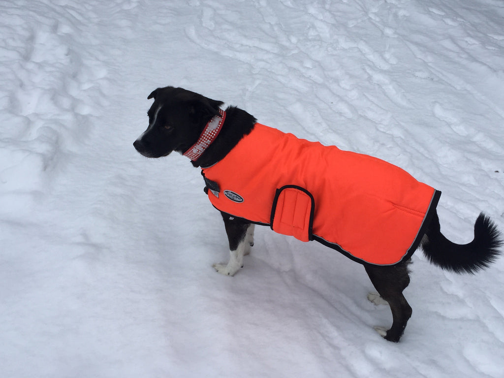 Selecting the Right Winter Coat For Your Dog