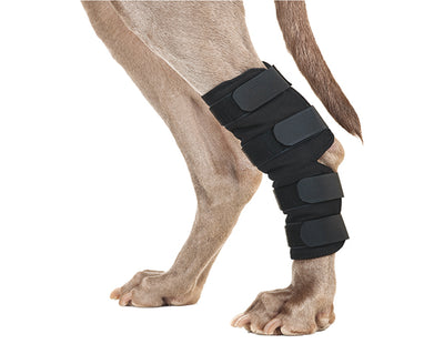 Back on Track Hock brace for dogs