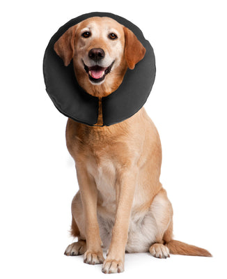 Medical recovery collar for dogs