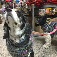 Dogs wearing chilly dog purple sweaters