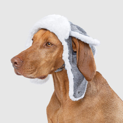 Canada pooch arctic winter hat
