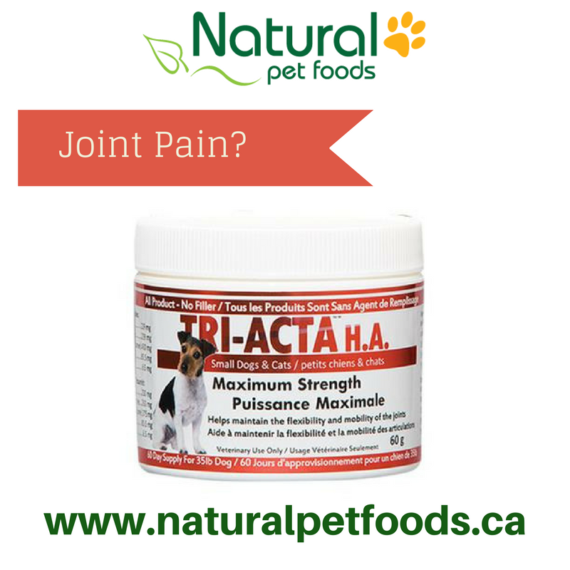 Tri-acta joint supplement for dogs, cats, horses