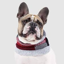 Canada Pooch Northern Knit Snood