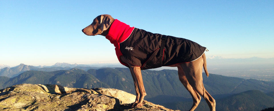 ChillyDogs - Great White North Winter Coat SALE 25% Off