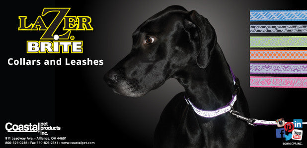 Coastal Lazerbright Collar