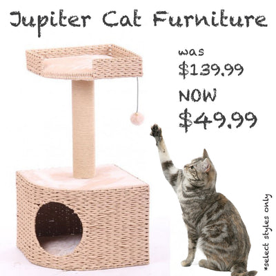 Jupiter cat furniture sale