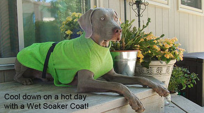 Chillydogd soaker coat