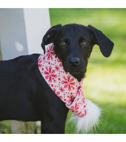 "Huggle Hounds - Holiday Scarf - XS up to 10"" SALE"