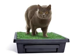 Pet Loo - Your Backyard in a Box - Small - Kitty Cat - SALE