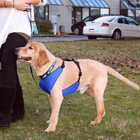 Canine Equipment Vest Harness 2