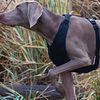 Canine Equipment Vest Harness 1