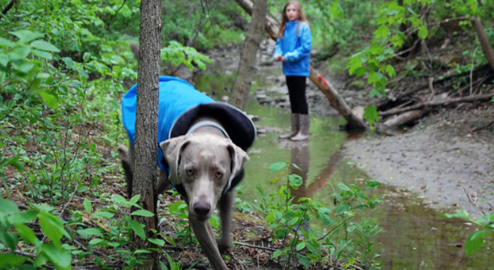 Chilly Dog - Rain Slicker Blue