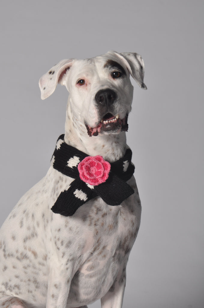 Chilly Dog Polkadot Black Scarf SALE