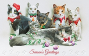 Christmas Cards - Cat