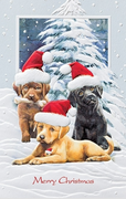 Christmas Cards - Dog