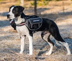 Ezydog Convert Saddle Bag