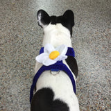 Doggles dog harness