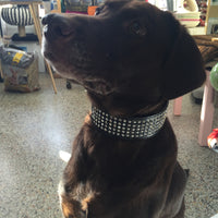 NPF Collars Wide Bling Collar in Black